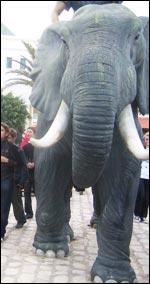 mevel_elephant.jpg