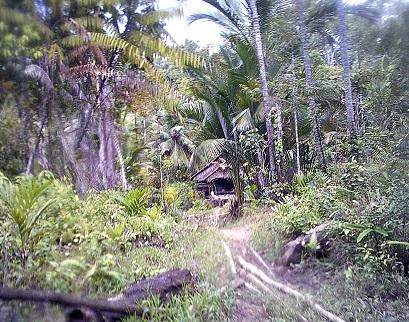 Maison mentawai
